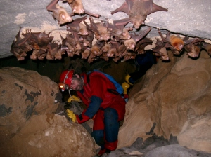 Negotiating bats; inside a cave in Meghalaya (Photo: George Baumler)