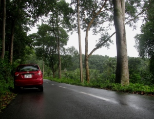 The road to Ponmudi (Photo: Shyam G Menon)
