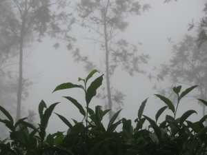 On Ponmudi (Photo: Shyam G Menon)