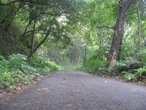 The road to Bonaccord (Photo: Shyam G Menon)