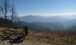 Mongoose and the mountains (Photo: Shyam G Menon)