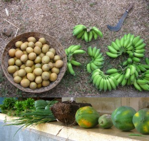Farm produce (Photo: Shyam G Menon).