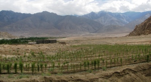 The saplings grown with melt water from the ice-stupa in the foreground and beyond to the right, tracts of open land, potential site for the university (Photo: Shyam G Menon)